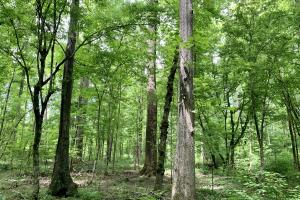 Yantley Creek Hunting and Timber Investment in Choctaw, AL (3 of 20)