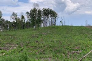 Yantley Creek Hunting and Timber Investment in Choctaw, AL (10 of 20)