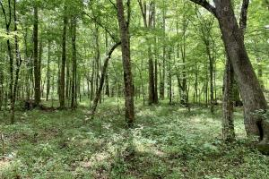 Yantley Creek Hunting and Timber Investment in Choctaw, AL (7 of 20)