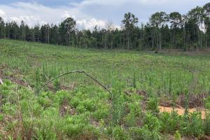Yantley Creek Hunting and Timber Investment in Choctaw, AL (13 of 20)