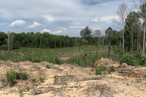 Yantley Creek Hunting and Timber Investment in Choctaw, AL (20 of 20)