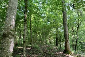 Slater Landing Hunting and Timber Investment - Choctaw County AL