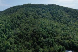 Yadkin Valley Hunting and Timber Tract - Caldwell County, NC