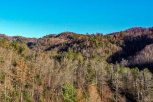 Globe Road  Hunting and Timber Tract - Caldwell County, NC