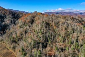 Johns River Hunting and Timber Tract - Caldwell County, NC