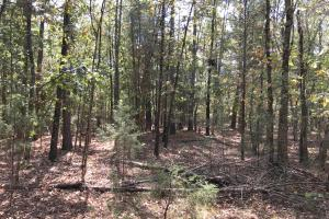 Wooded Acreage Near New Beatty Ford Rd  - Rowan County NC