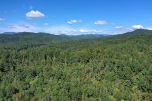 Large Acreage Woodland with Streams and Multiple Access Roads - Buncombe County NC