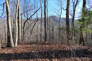 Large Acreage Woodland with Streams and Multiple Access Roads - Buncombe County, NC
