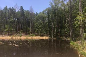 Shivers Green Homesite with Pond in Kershaw, SC (3 of 17)