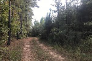 South Sandy Road Tract - Tuscaloosa County AL