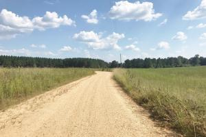 Isek Fowler Road Tract in Fayette, AL (2 of 13)