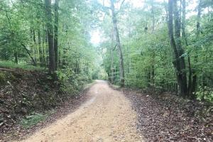 Isek Fowler Road Tract in Fayette, AL (7 of 13)