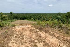 New Hope Camp Hunting and Timber Tract - Lauderdale County MS