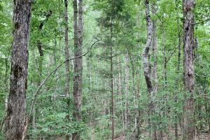 De Kalb Station Hunting and Timber Tract - Kemper County MS