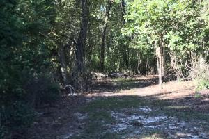Barnes Recreational and Hunting Tract in Clarendon County, SC (5 of 10)