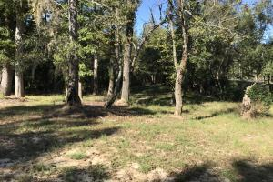 Barnes Recreational and Hunting Tract in Clarendon County, SC (4 of 10)
