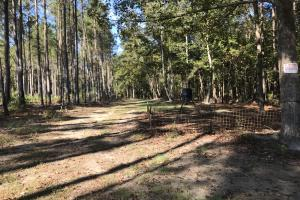 Barnes Recreational and Hunting Tract in Clarendon County, SC (6 of 10)