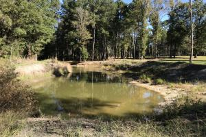 Barnes Recreational and Hunting Tract in Clarendon County, SC (3 of 10)