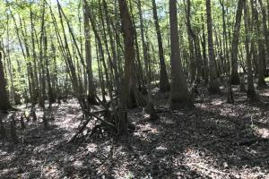 Barnes Recreational and Hunting Tract in Clarendon County, SC (10 of 10)