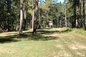 Barnes Recreational and Hunting Tract in Clarendon County, SC (9 of 10)