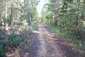 Esmer Thomspon Road Timber & Hunting Tract in Greene, AL (3 of 16)