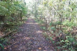 Esmer Thomspon Road Timber & Hunting Tract in Greene, AL (8 of 16)