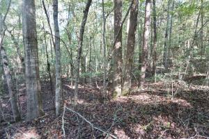 Esmer Thomspon Road Timber & Hunting Tract in Greene, AL (7 of 16)