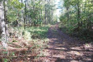 Esmer Thomspon Road Timber & Hunting Tract in Greene, AL (14 of 16)