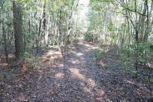 Esmer Thomspon Road Timber & Hunting Tract in Greene, AL (11 of 16)