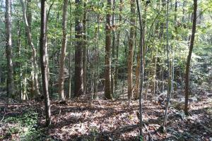 Esmer Thomspon Road Timber & Hunting Tract in Greene, AL (2 of 16)