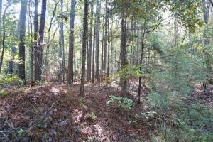 Esmer Thomspon Road Timber & Hunting Tract in Greene, AL (16 of 16)