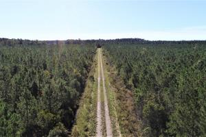 Hwy 101 Timber Tract - Carteret County NC