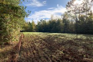 Highway 30 Hunting and Timber Investment - Marengo County AL
