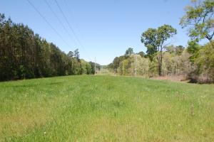 Timberfield II -Timberland and Hunting 345 Ac in Amite County, MS