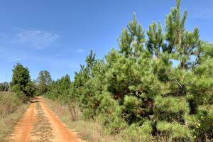 The Forest Home Road Timber & Hunting Investment  in Butler, AL (7 of 35)