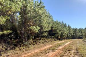 The Forest Home Road Timber & Hunting Investment  in Butler, AL (13 of 35)