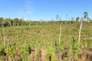 The Forest Home Road Timber & Hunting Investment  in Butler, AL (5 of 35)