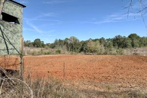 The Forest Home Road Timber & Hunting Investment  in Butler, AL (17 of 35)