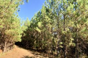 The Forest Home Road Timber & Hunting Investment  in Butler, AL (28 of 35)
