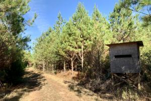 The Forest Home Road Timber & Hunting Investment  in Butler, AL (26 of 35)