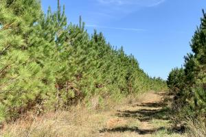 The Forest Home Road Timber & Hunting Investment  in Butler, AL (33 of 35)