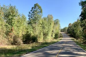 The Forest Home Road Timber & Hunting Investment  in Butler, AL (4 of 35)