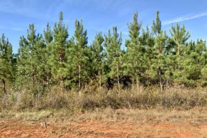 The Forest Home Road Timber & Hunting Investment  in Butler, AL (31 of 35)