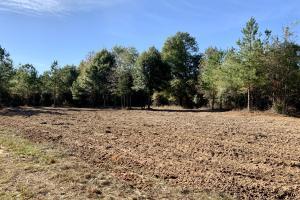 The Forest Home Road Timber & Hunting Investment  in Butler, AL (23 of 35)