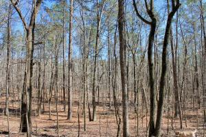 The Longleaf Ridge South Tract