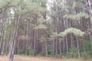 Pretty Branch Road Homesite and Fishing Tract in Sumter, AL (3 of 5)