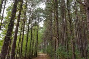 Pretty Branch Road Homesite and Fishing Tract in Sumter, AL (4 of 5)