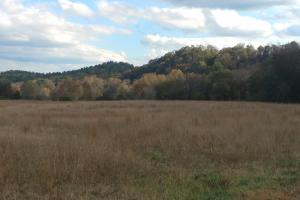 Ouachita Mountain Farm and Hunting Land on the Caddo River in Montgomery, AR (3 of 21)