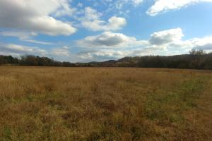 Ouachita Mountain Farm and Hunting Land on the Caddo River in Montgomery, AR (11 of 21)