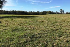 Big Creek Cattle Farm and Residential - Jones County MS